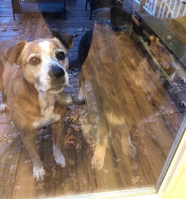 Sad looking dog standing outside glass door