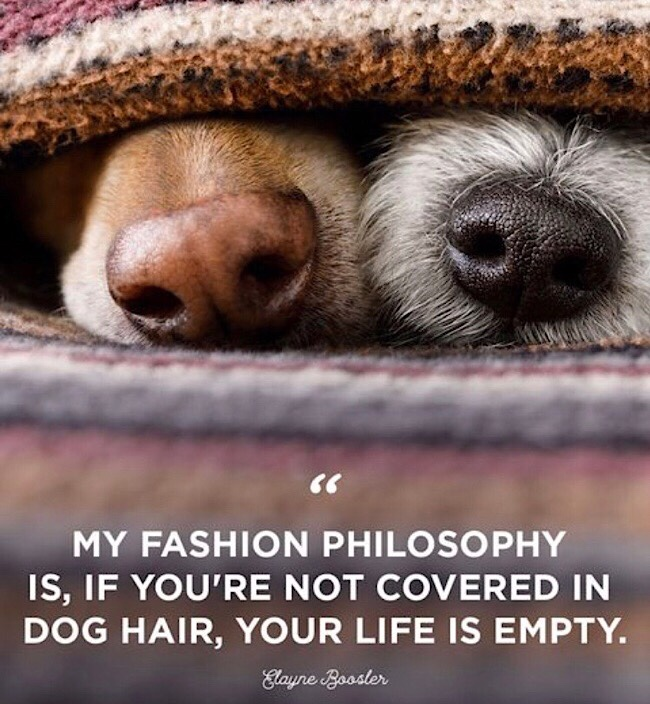 """""""If you're not covered in dog hair, your life is empty"""" - Boosler"""