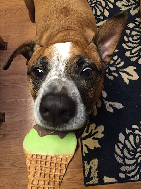 Dog eating frosted gourmet dog treat