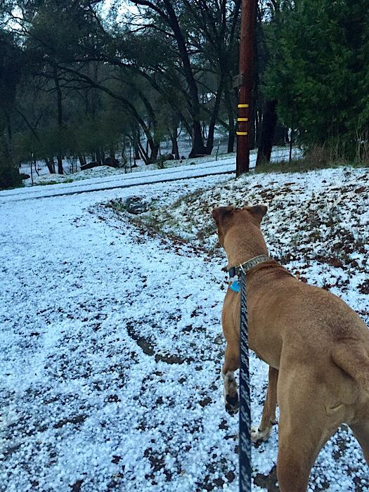 Dog walking in snow